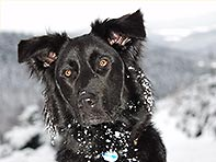 hundeportrait winter